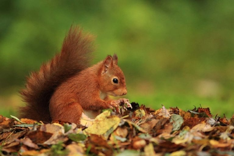 Our self catering cottages near Oban are a haven for wildlife