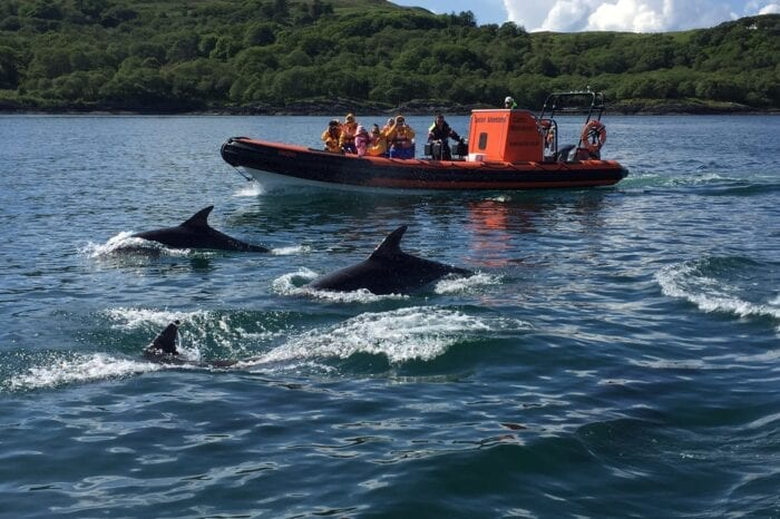 Seafari Wildlife Boat Trips from Easdale