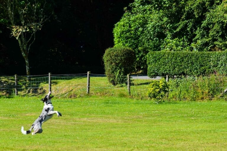 Melfort Village is pet friendly and we have a secure paddock area for dogs to play in off the lead.