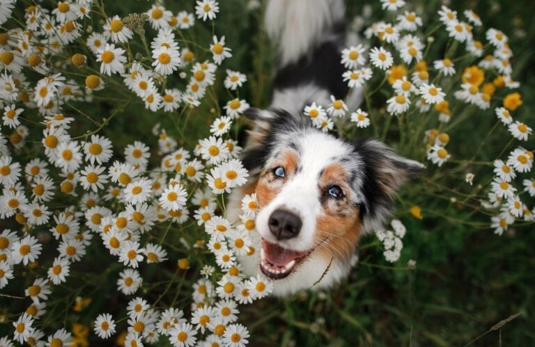 We're Pet Friendly and Dogs love holidays at Melfort Village